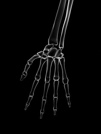 vitreous body: medical illustration of the hand bones