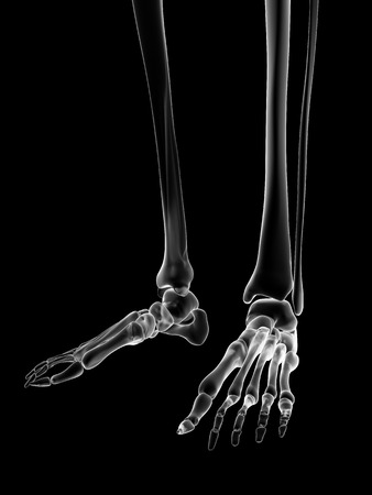 vitreous body: medical illustration of the skeletal foot Stock Photo