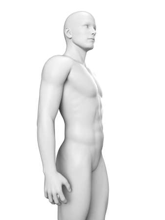 anatomy body: illustration of a white man