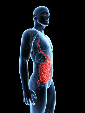 medical illustration of the digestive system Stock Illustration - 22818785