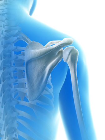 scapula: rendered illustration of the shoulder joint Stock Photo