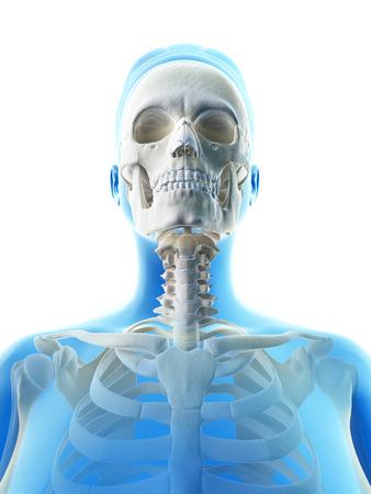 rendered illustration of the female skull Stock Illustration - 23222020