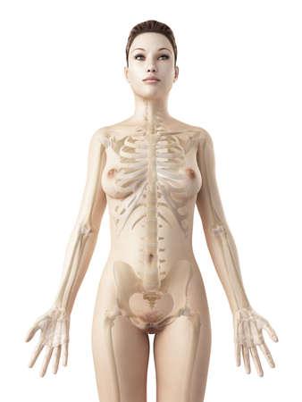 gezonde mensen: teruggegeven illustratie van de vrouwelijke skelet Stockfoto