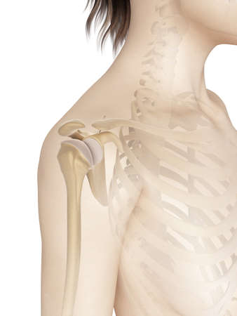 shoulders: female shoulder anatomy Stock Photo