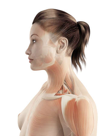 woman neck: muscles of the neck Stock Photo