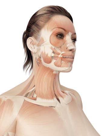piel rostro: m�sculos de la cara Foto de archivo