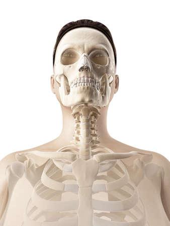 skull anatomy photo