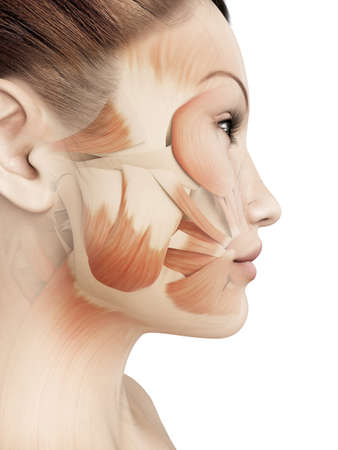 face to face: female facial muscles Stock Photo