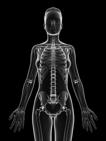 female anatomy: transparent female skeleton - upper body Stock Photo