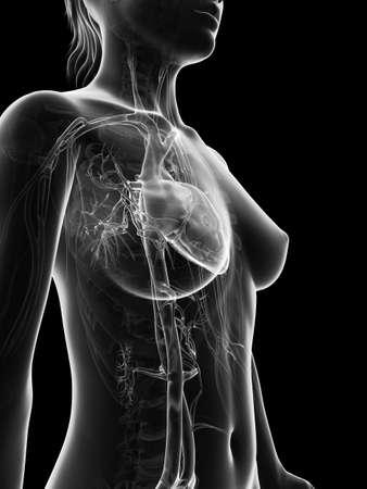 atrium: grey, transparent heart of a female