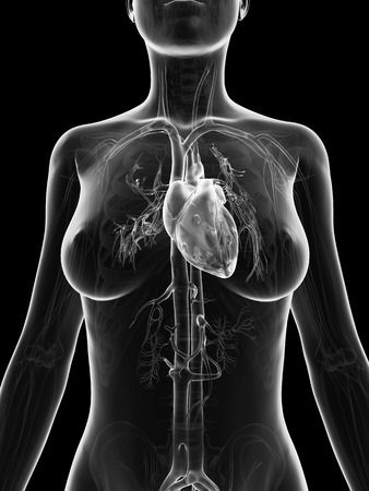 aortic: grey, transparent heart of a female