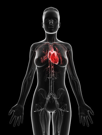 aortic: red highlighted female´s heart Stock Photo