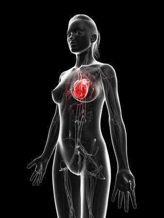 red highlighted female´s heart Stock Photo