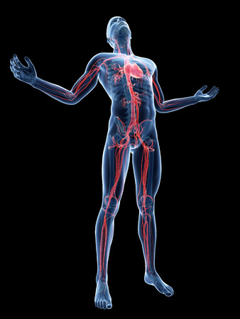 aortic: male posing - visible vascular system Stock Photo