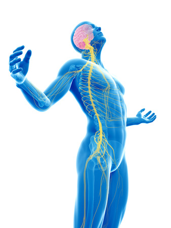 nerves: male posing - visible brain and nerves Stock Photo