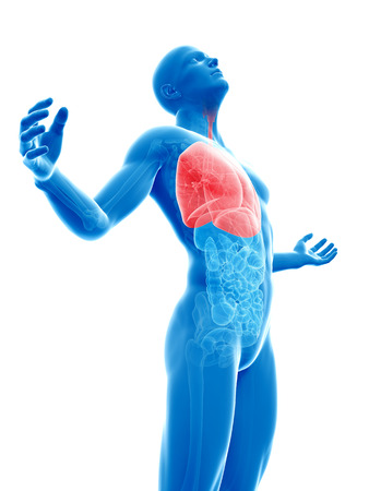 male posing - highlighted lung photo