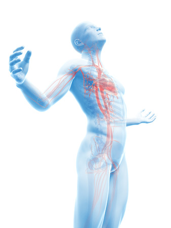 aortic bodies: male posing - visible vascular system Stock Photo