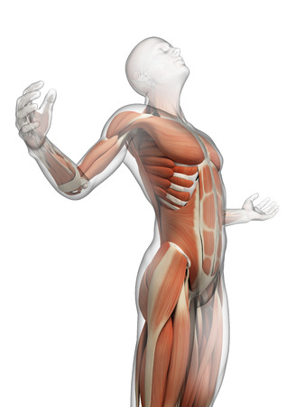 anatomy muscles: male posing - visible muscles Stock Photo