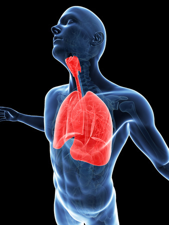 breathe: male posing - highlighted lung
