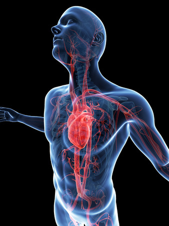 aorta: male posing - visible vascular system Stock Photo