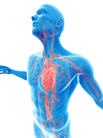 male posing - visible vascular system Stock Photo