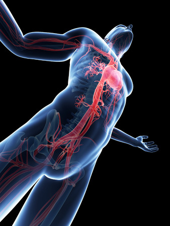 vascular: male posing - visible vascular system Stock Photo