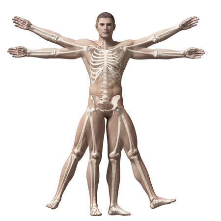 esqueleto humano: Hombre de Vitruvio - esqueleto Foto de archivo