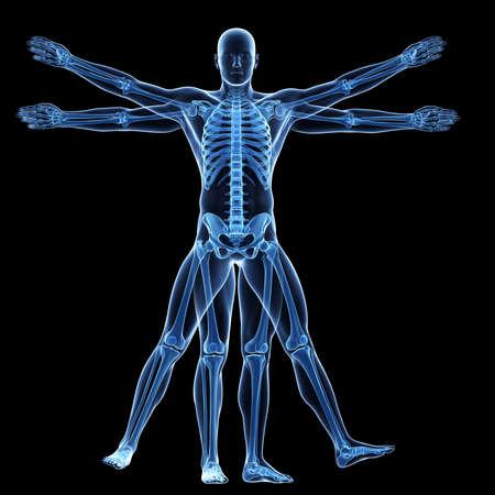 vitruvian man: Hombre de Vitruvio - esqueleto Foto de archivo