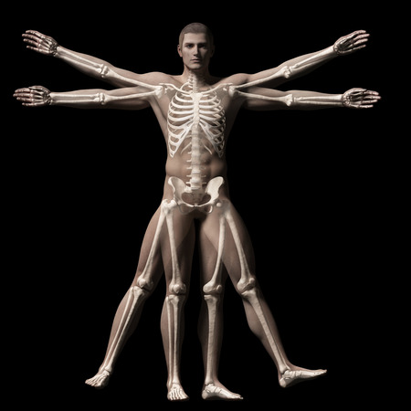 vitruvian man - skeleton photo