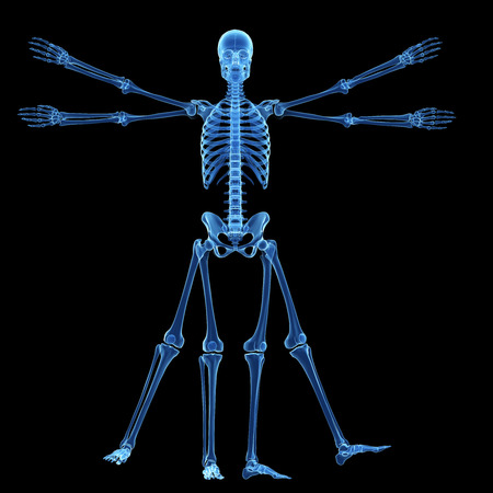 uomo vitruviano: Uomo Vitruviano - scheletro