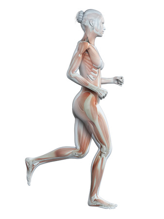 sports training: medical 3d illustration - jogging woman - visible muscles Stock Photo