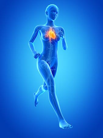 blood sport: medical 3d illustration - female jogger with visible heart