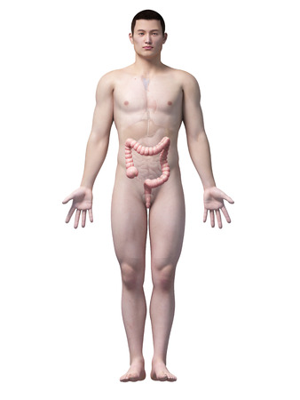 male large intestine: illustration of the colon of an asian male guy Stock Photo