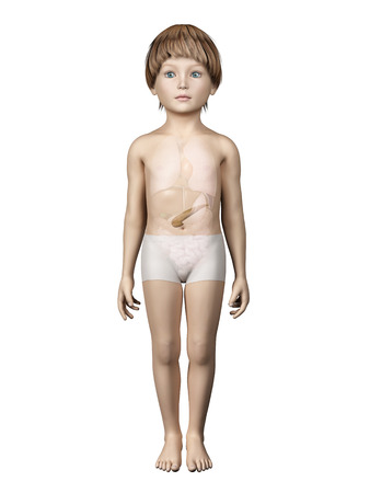pancreatitis: anatomy of a young child - pancreas