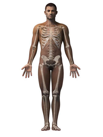 sternum: anatomy of an african american man - skeleton