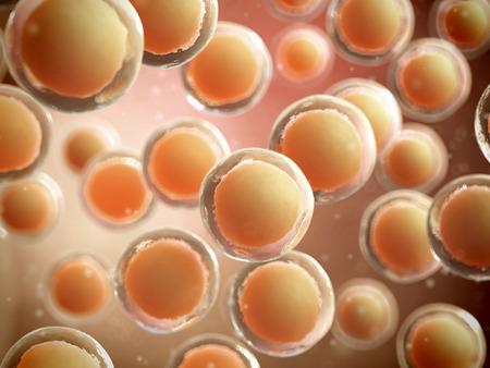 zelle: medizinische 3D-Darstellung - konzeptionelle menschlichen Zellen