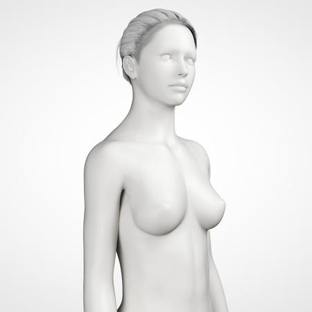 grey female - upper body photo