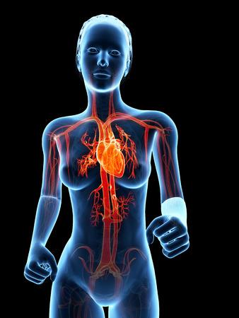 human vein heartbeat: medical 3d illustration - jogging woman - visible heart