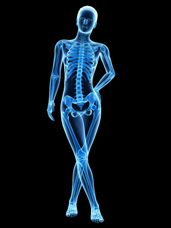 human body anatomy: medical 3d illustration - female anatomy - skeleton