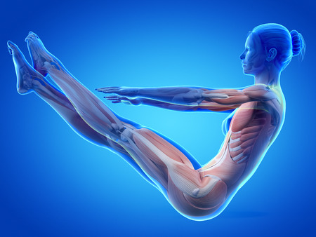 anatomy muscles: woman working out - muscle anatomy Stock Photo