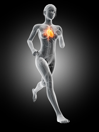 sports training: medical 3d illustration - female jogger with visible heart