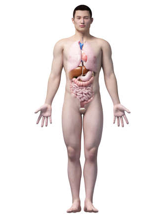 body heart: illustration of the organs of an asian male guy Stock Photo