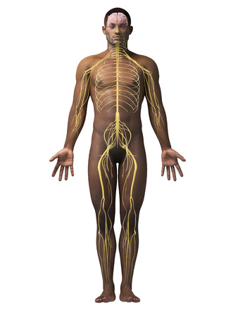 anatomy of an african american man - nerves Stock Photo