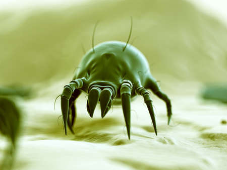 mite: medical 3d illustration - typical dust mite Stock Photo