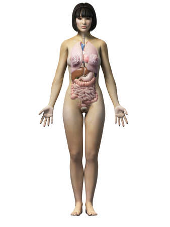 anatomy of an asian woman - organs