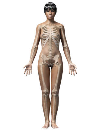 anatomy of an african american woman - skeleton photo