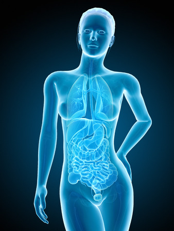 medical illustration of the female organs