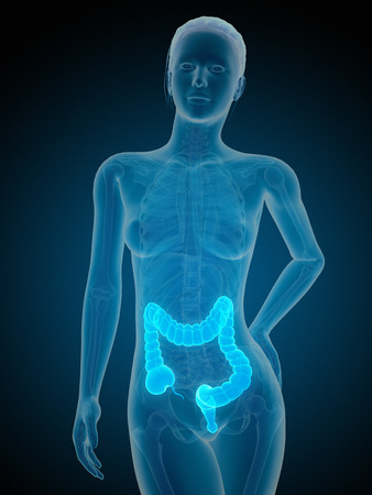 medical illustration of the female colon Stock Illustration - 26849776