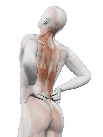 anatomia: un hombre que tiene un dolor agudo en la espalda