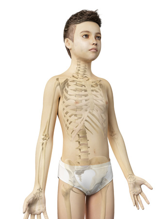 anatomy of a young boy - the skeleton